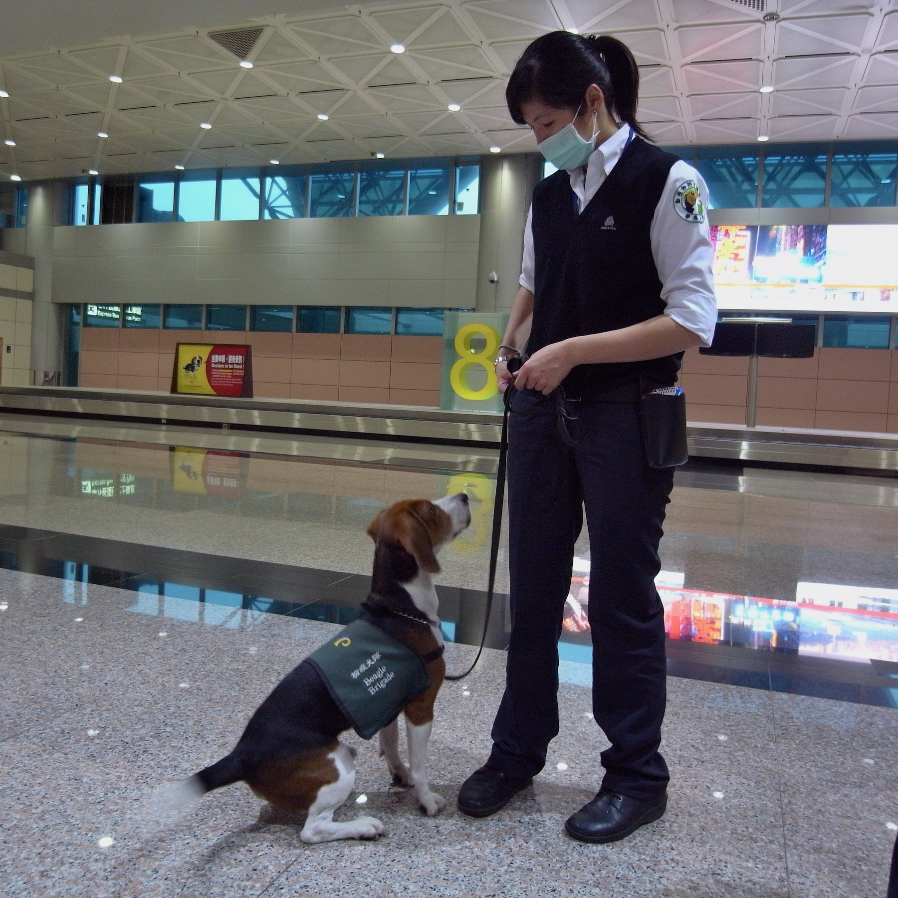 Airport Sniffer Dog on Duty