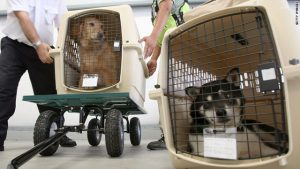dogs as cargo