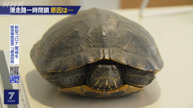to show the tortoise in the incident